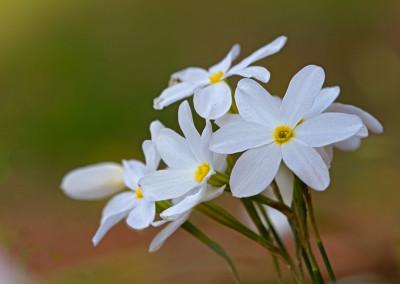 Natuurpark Cornalvo, bloemen in de herfst