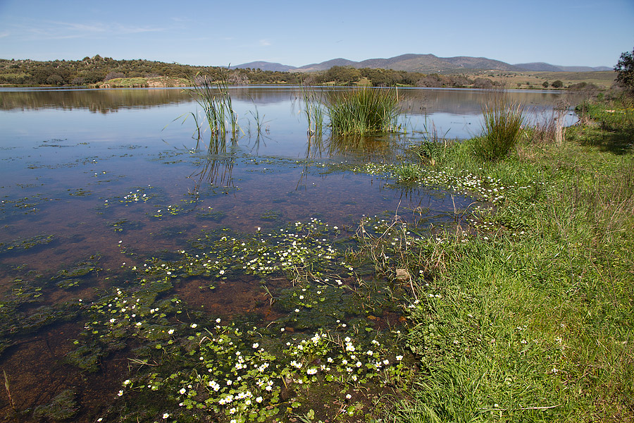 Het stuwmeer van Alcollarín, om dit meer hebben we een mooie wandelroute uitgezet