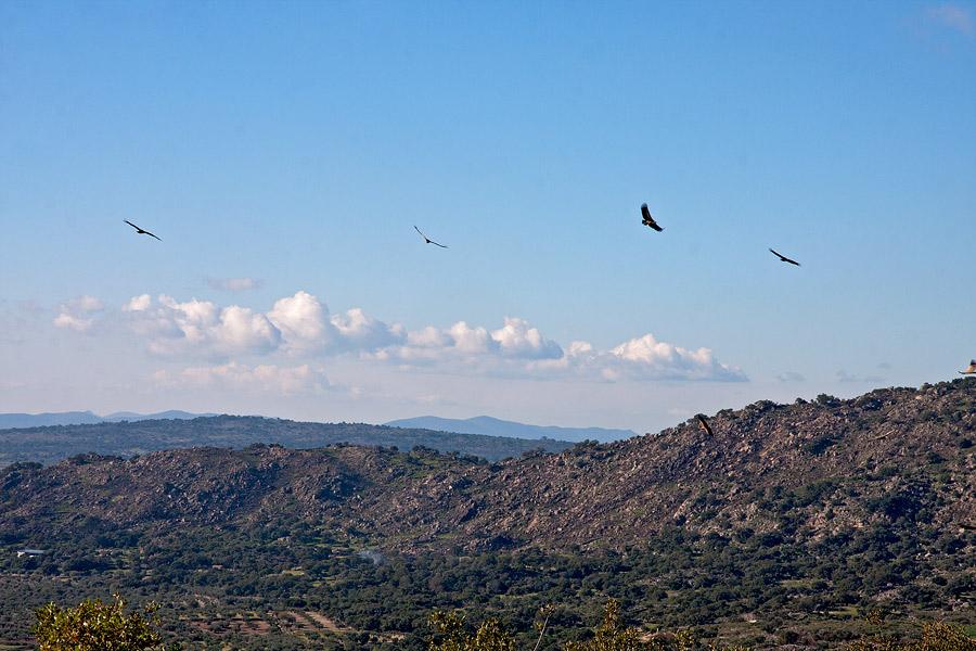 Vale gieren vanaf de berg bij onze finca.